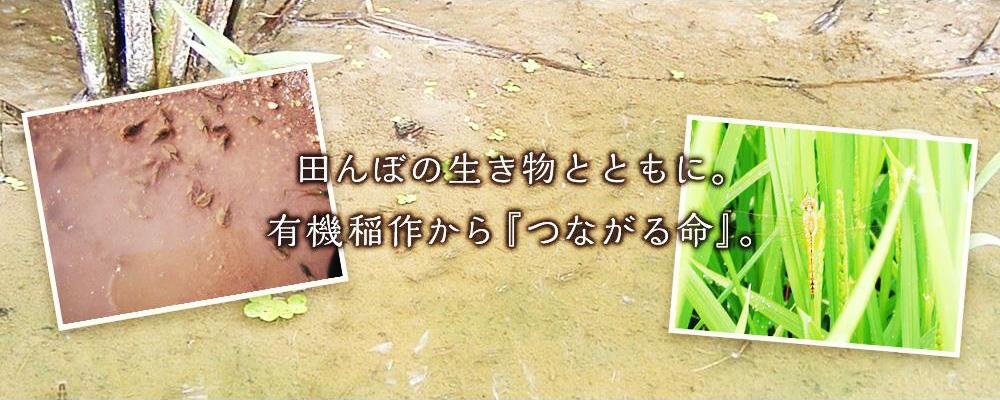 田んぼの生き物とともに。有機稲作から『つながる命』。